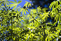 美丽的树叶枝叶桌面