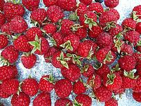 收获的树莓