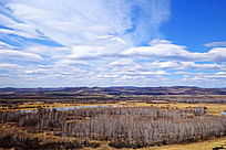 早春的原野白桦林