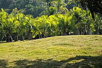 珠海的公园