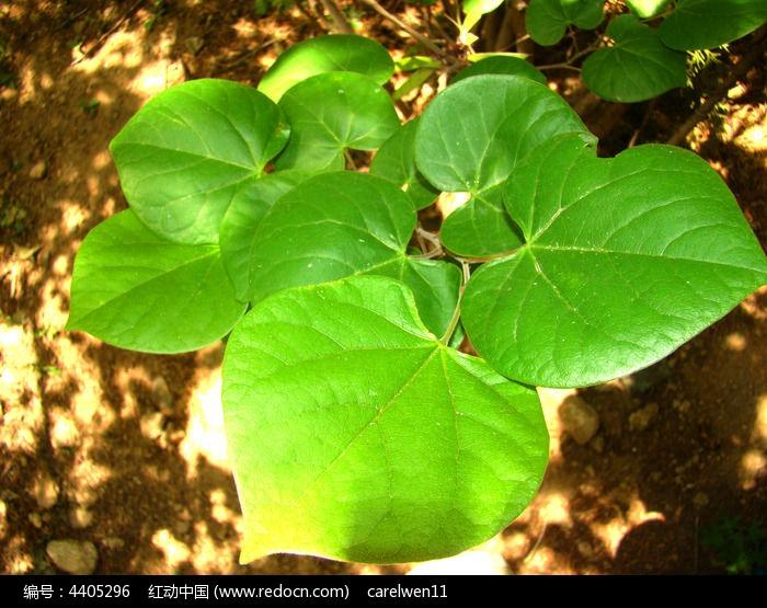 绿叶的植物图片