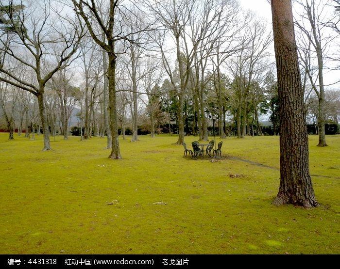 原创摄影图 动物植物 树木枝叶 草坪大树蓝天