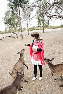 喂袋鼠吃面包的游客
