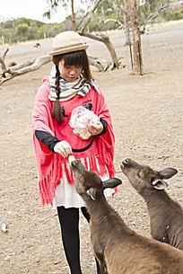 正在喂袋鼠吃面包的女孩