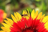 一只停留在花上的昆虫