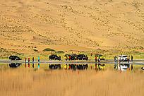 巴丹吉林沙湖畔越野车队