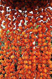 成片被串起来晾晒的柿子