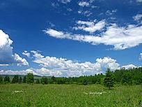 大兴安岭森林草甸