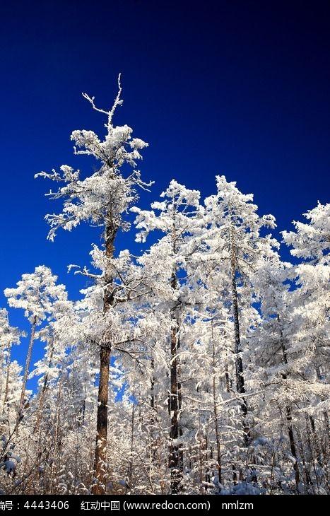 大兴安岭雪林图片,高清大图_森林树林素材