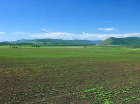 黑土地种植的油菜