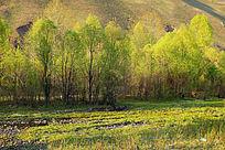 树林草甸野花