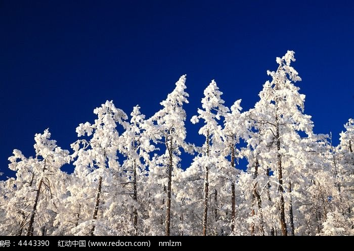 冰雪 寒冷 蓝天图片