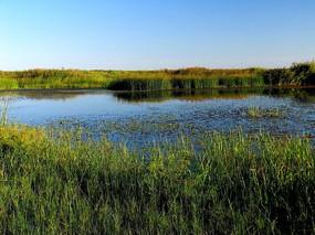 乌兰泡水草丰茂的湿地