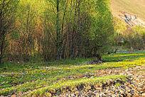 野花盛开的树林草甸