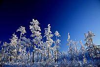 原始森林冬雪风光