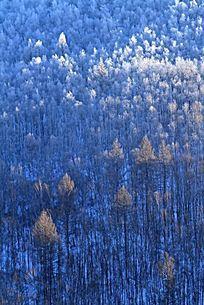 阿尔山森林冬雪