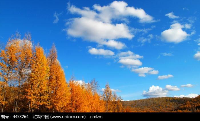 大兴安岭林区秋色图片