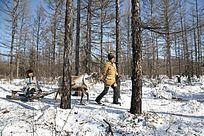 森林驯鹿爬犁