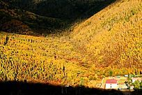 兴安岭森林秋色