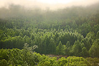 原始森林中晨雾飘荡