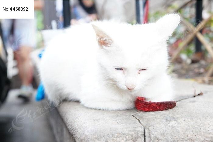 猫图片,高清大图_陆地动物素材