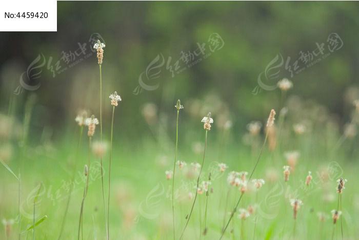 原创摄影图 动物植物 花卉花草 茂盛的小草  请您分享: 红动网提供