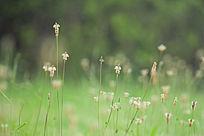 茂盛的小草