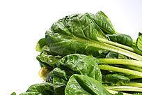 新鲜的绿色菠菜