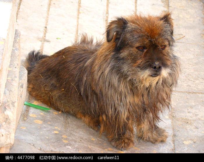 爬在地上狗狗图片,高清大图_陆地动物素材