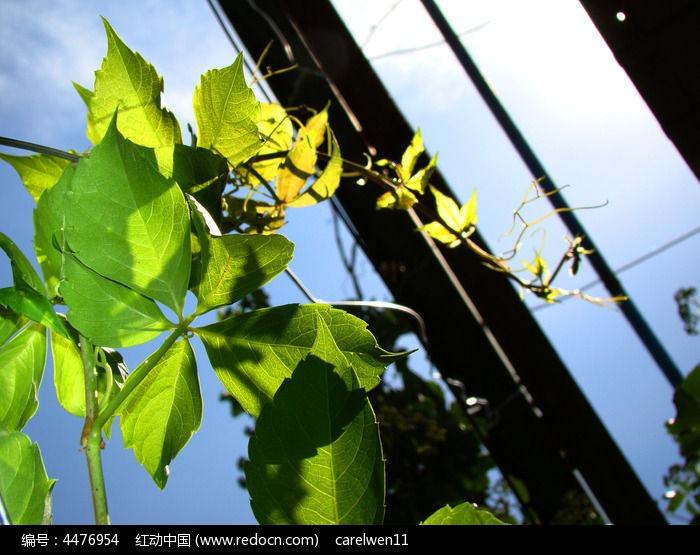 原创摄影图 动物植物 花卉花草 爬在铁丝上的植物
