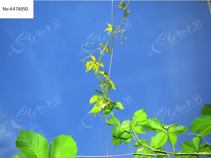 原创摄影图 动物植物 花卉花草 自由生长的植物
