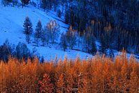 大兴安岭冬季山林风景