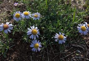 地上的野花
