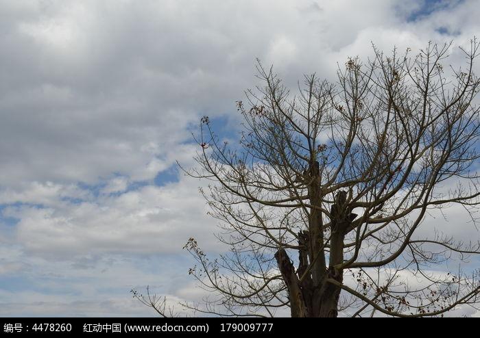 蓝天白云树