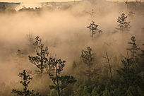 原始森林彩色云海