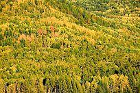 原始森林地理风光