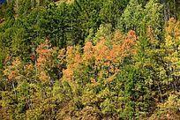 原始森林秋景