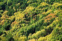 原始森林秋韵