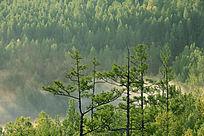 原始森林云雾