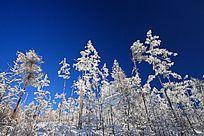 冬季原始森林