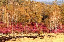 火山熔岩上的森林