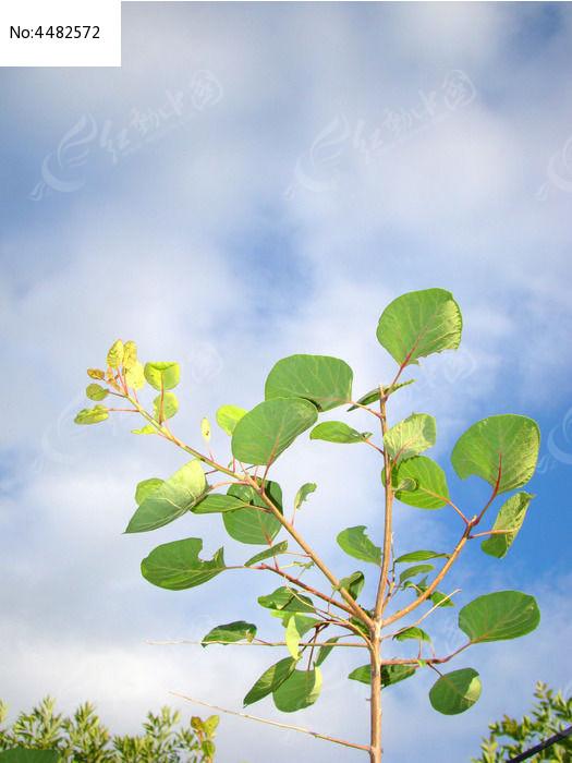 原创摄影图 动物植物 花卉花草 蓝天白云前的绿树
