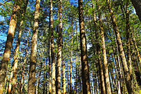 丽江原始森林风光