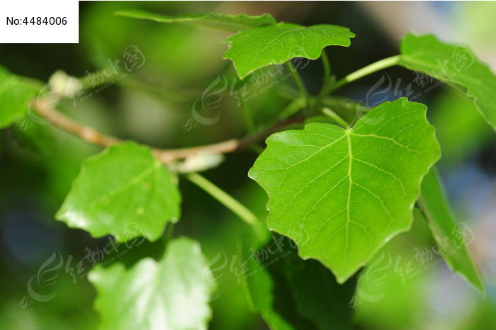 原创摄影图 动物植物 树木枝叶 片片树叶