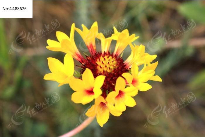 漂亮的野花图片