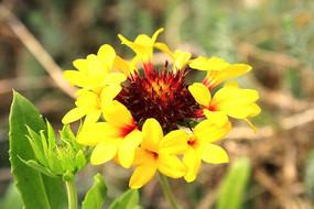 色彩漂亮的野花