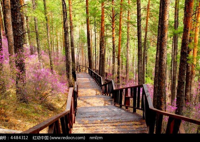 森林木栈道图片