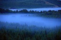 森林夜雾飘渺