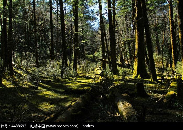 云南原始森林风景