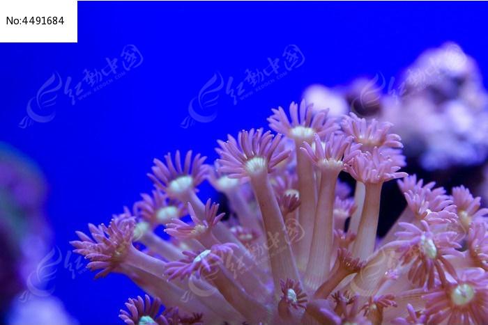展开的珊瑚虫细部结构